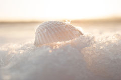 Frozen Sea Shell. A white shell placed on frozen water from sea and shells relics with a sea view Stock Photography