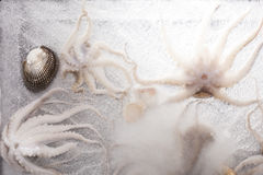 Frozen seafood background. Octopus and seashell in ice. Luxurious seafood eating Royalty Free Stock Photos