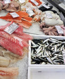 Frozen seafood and fish on ice. In the fish trade.  Italian delicacy from the sea Stock Images
