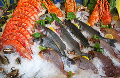 Frozen seafood Stock Images
