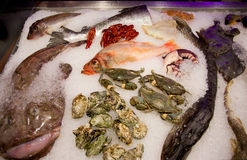 Frozen seafood. Variety of frozen seafood on ice for sale Royalty Free Stock Photos