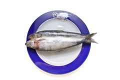 Frozen shad fish on the plate isolated Royalty Free Stock Photography