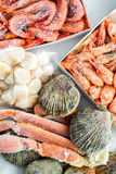 Frozen shells of the scallop, shrimps and crabs. Packaging for sale in the store Royalty Free Stock Image