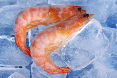 Frozen shrimp on blue Stock Images