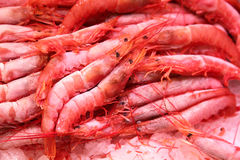 Frozen shrimp on food market Royalty Free Stock Image