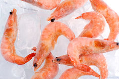 Frozen shrimp with ice Stock Photography