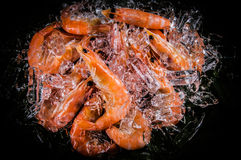 Frozen shrimp with ice cubes on a black background Royalty Free Stock Images