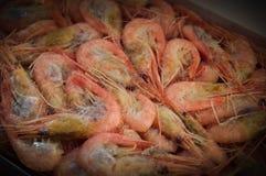 Frozen shrimp. Frozen shrimp in package. Selective focus Stock Photography