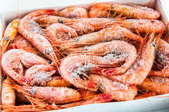 Frozen shrimp packaged. For sale in the store Royalty Free Stock Image