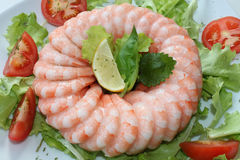 Frozen shrimp ring Stock Photography