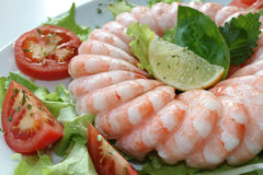 Frozen shrimp ring Royalty Free Stock Photo