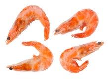 Frozen shrimps Stock Image
