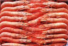 Frozen shrimps. Royalty Free Stock Photography