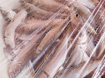 Frozen skad fish Royalty Free Stock Images