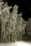 FROZEN: Ski trail. Cold night in a forest where ski trails live Stock Images
