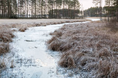 Frozen small river with frosty flood meadow surrounding in a Nordic landscape Stock Photography