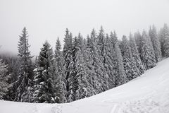 Frozen snow-covered forest in fog and snow slope for freeride Stock Image