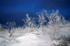 Frozen snow on grass. Mystical landscape with frozen russian winter about -40 C degrees - very cold weather. Snow on the frozen trees and grass royalty free stock photography