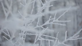 Frozen snowy branches stock video footage