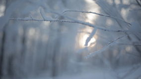 Frozen snowy branches stock footage