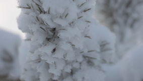 Frozen snowy branches stock video