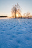 Frozen snowy lake and sunrise behind trees Stock Image
