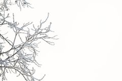 Frozen and snowy tree branches against white sky on a sunny winter day. Snowy and icy tree branches against white sky. White winter landscape detail on sunny day Stock Photography