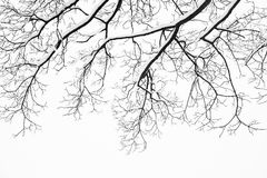 Frozen snowy trees and branches in freezing winter landscape Royalty Free Stock Images