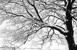 Frozen snowy trees and branches in freezing winter landscape Royalty Free Stock Photo