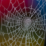 Frozen spider's web at dawn. Stock Photos