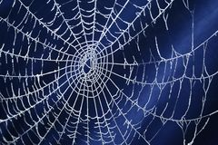 Frozen Spider Web Royalty Free Stock Images