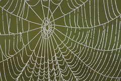 Frozen Spider Web. Close-up of a frozen spider web against green background Stock Images