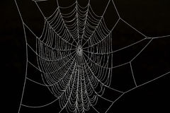Frozen Spider Web Royalty Free Stock Photography