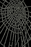 Frozen spider web isolated on black Royalty Free Stock Photos