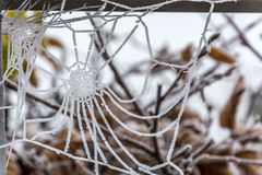 Free Frozen Spider Web On A Cold Morning Royalty Free Stock Photos - 94395558
