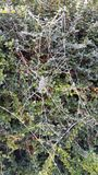 Frosty spiders web Stock Image