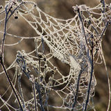 Frozen Spiders Network Royalty Free Stock Photo