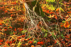 Frozen Spiders Web. A frozen Spiders Web in morning sun Stock Photography