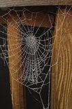 Frozen spiderweb isolated on black Royalty Free Stock Photo
