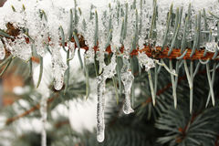 Frozen sprig Stock Images