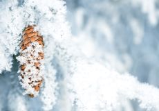 Free Frozen Spruce Branch With Cone Close Up. Stock Photos - 138793393