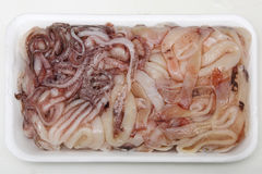 Frozen squid Stock Image