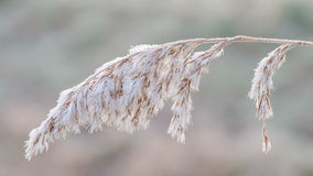 Frozen stem. On a beautiful winter morning royalty free stock photography