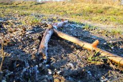 Frozen stick on the meadow Royalty Free Stock Photo