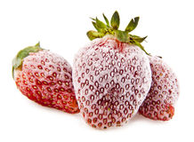 Frozen strawberry Stock Images