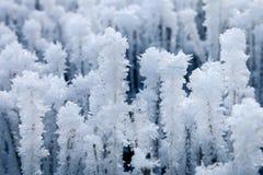Frozen Straws on the stubble Royalty Free Stock Photo