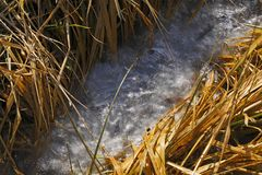 Frozen stream among dry grasses at early spring Stock Photo