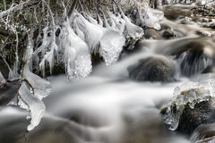 Frozen stream in forest Stock Photo