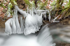 Frozen stream in forest Royalty Free Stock Photo