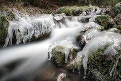 Frozen stream in forest Stock Image